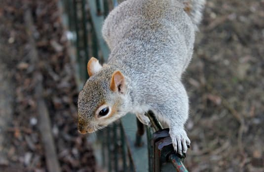 squirrel-in-winter
